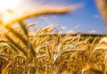 Różne preparaty do zapewnienia ochrony upraw